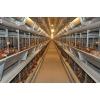 万华畜牧设备有限公司成年供应养鸡设备