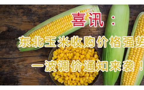 喜讯:东北玉米收购价格强势上涨 一波调价通知来袭!!!
