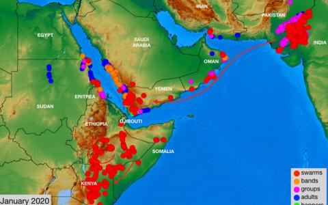 农业农村部:沙漠蝗在我国大规模暴发风险很低