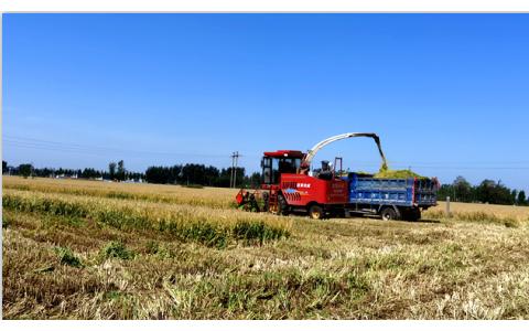 广泛宣传,积极行动 全省麦秸饲料化收储工作圆满收官