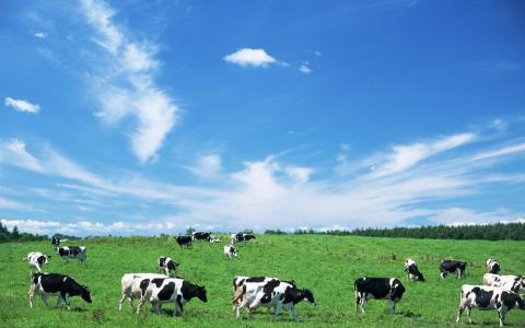 中国乳业国际化:海普诺凯10年蜕变,澳优实力彰显
